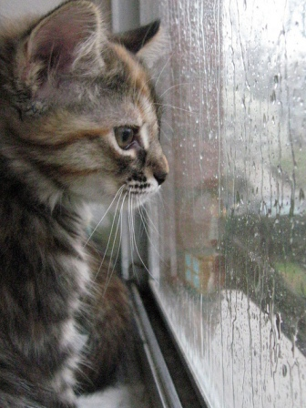 Watching_rain_1