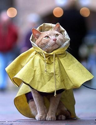 Rainydaycat
